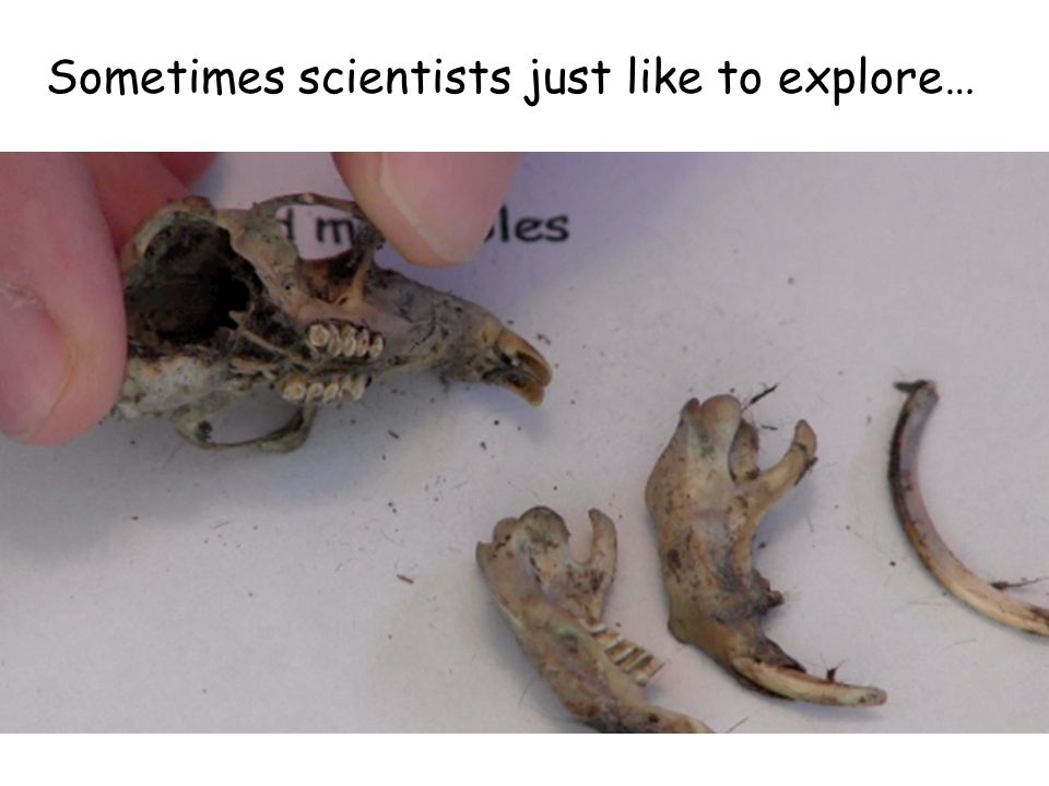 Sometimes scientists just like to explore…
