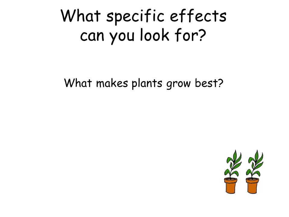 What makes plants grow best? What specific effects can you look for?