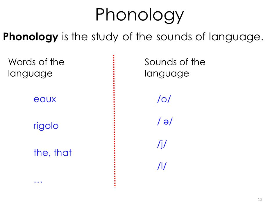 Phonology Phonology is the study of the sounds of language. 13 eaux rigolo the, that … /o/ / ə / /j/ /l/ Words of the language Sounds of the language