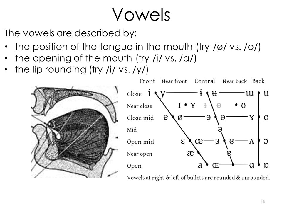 Vowels The vowels are described by: the position of the tongue in the mouth (try /ø/ vs.