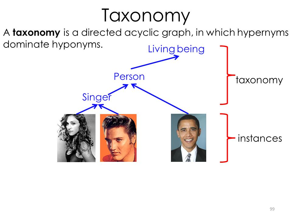 Taxonomy 99 Person Singer A taxonomy is a directed acyclic graph, in which hypernyms dominate hyponyms. Living being taxonomy instances