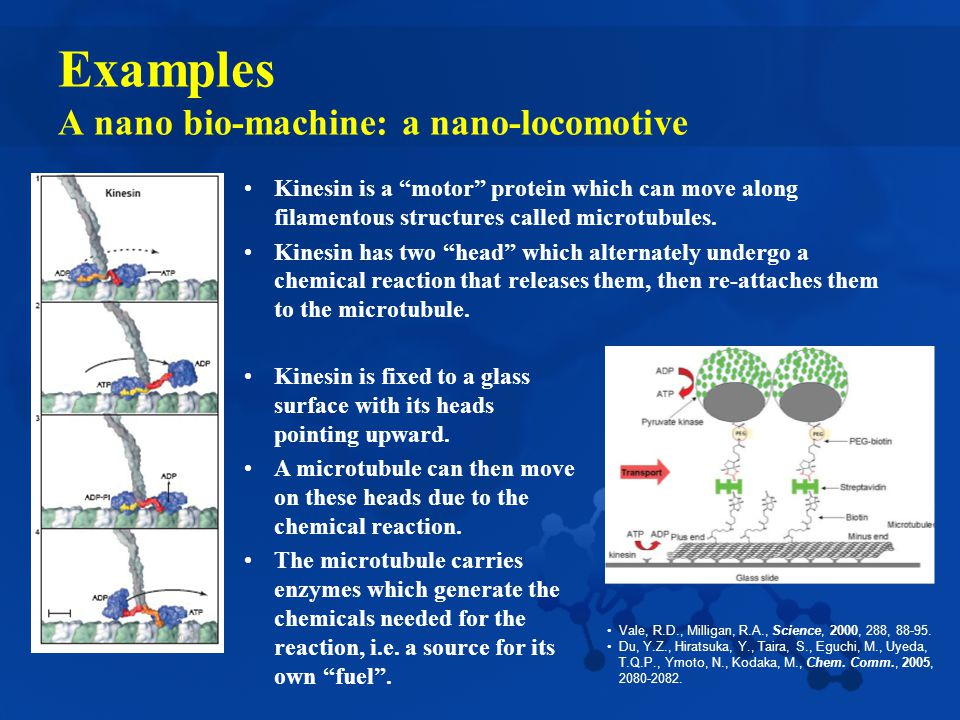 Examples A nano bio-machine: a nano-locomotive Kinesin is a motor protein which can move along filamentous structures called microtubules.
