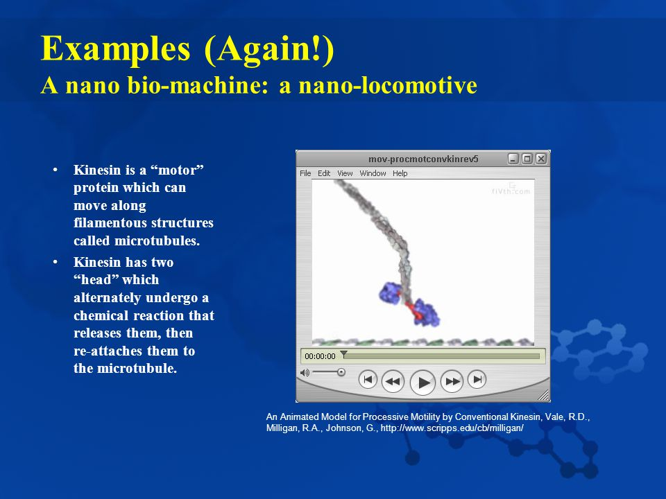 Examples (Again!) A nano bio-machine: a nano-locomotive Kinesin is a motor protein which can move along filamentous structures called microtubules.