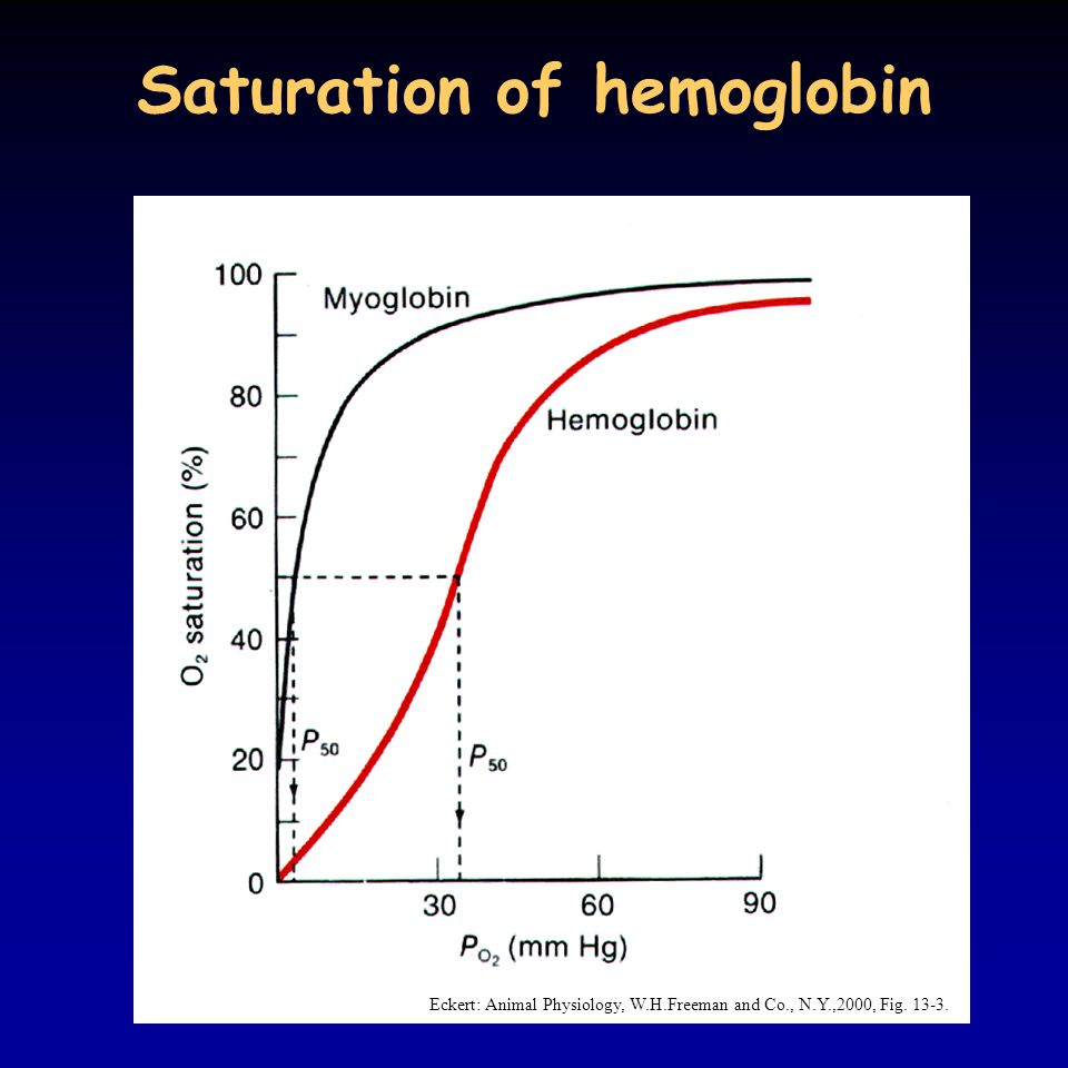 Saturation of hemoglobin Eckert: Animal Physiology, W.H.Freeman and Co., N.Y.,2000, Fig. 13-3.