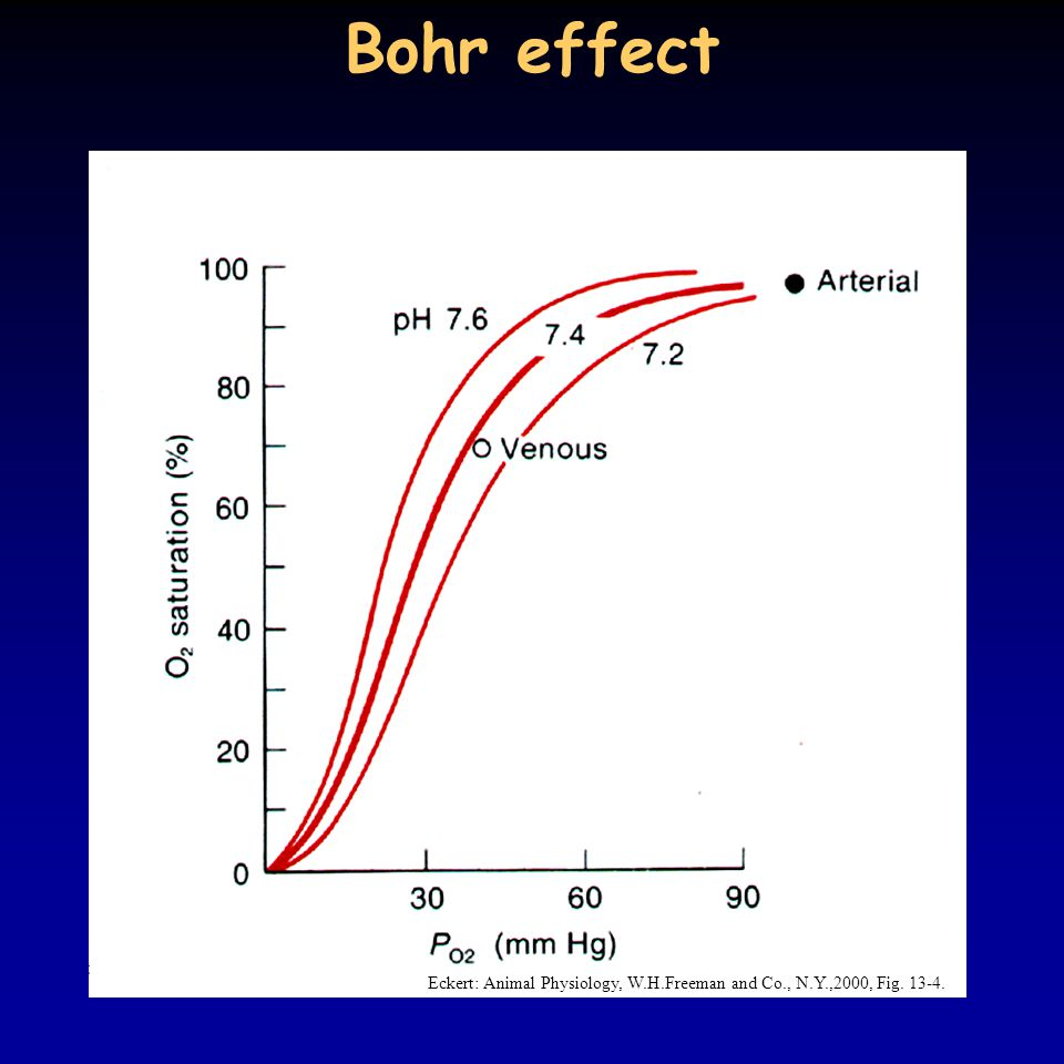 Bohr effect Eckert: Animal Physiology, W.H.Freeman and Co., N.Y.,2000, Fig. 13-4.