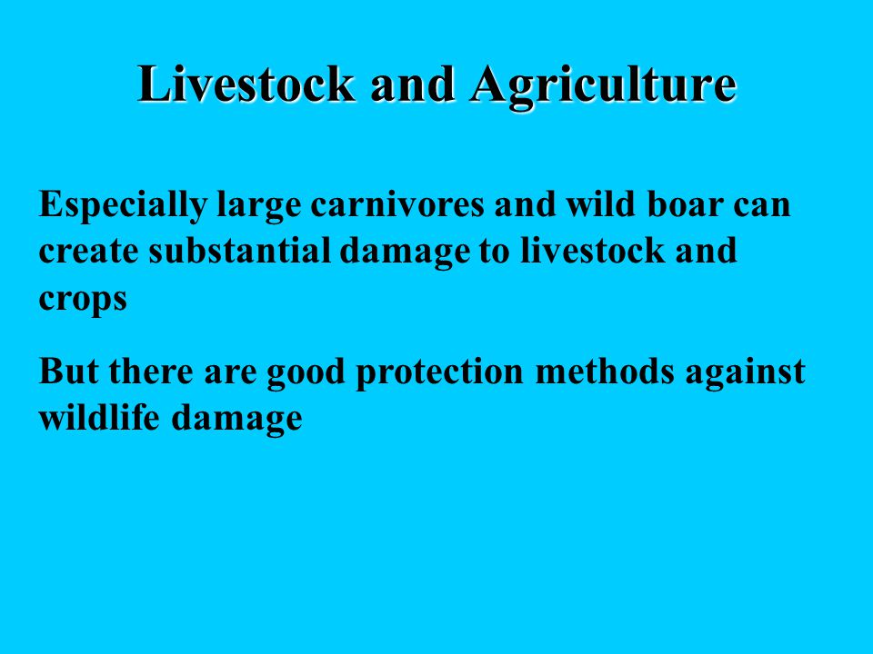 Livestock and Agriculture Especially large carnivores and wild boar can create substantial damage to livestock and crops But there are good protection