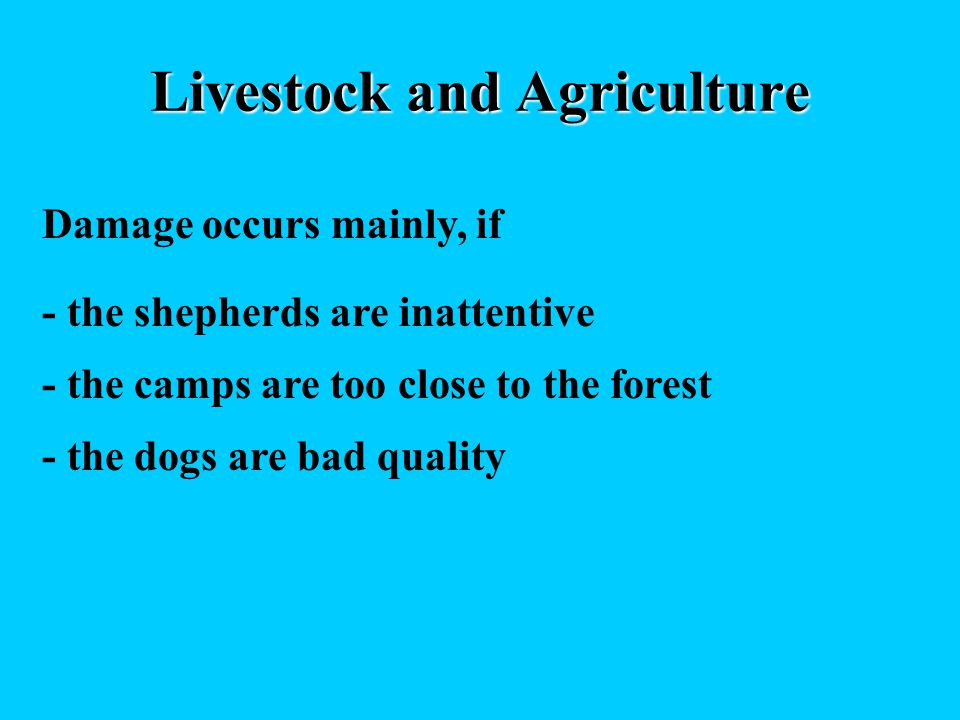 Livestock and Agriculture Damage occurs mainly, if - the shepherds are inattentive - the camps are too close to the forest - the dogs are bad quality