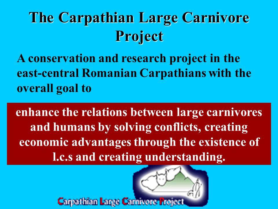 The Carpathian Large Carnivore Project A conservation and research project in the east-central Romanian Carpathians with the overall goal to enhance the relations between large carnivores and humans by solving conflicts, creating economic advantages through the existence of l.c.s and creating understanding.