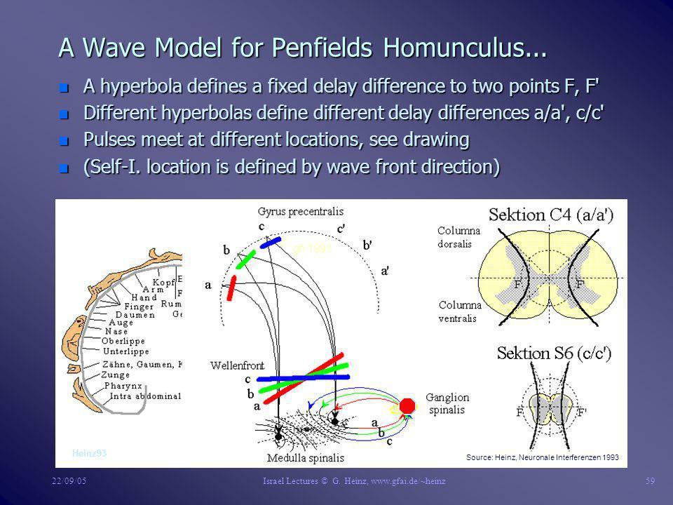 Bio-Models Author: Dr. Gerd Heinz, GFaI, 12489 Berlin Albert-Einstein-Str.