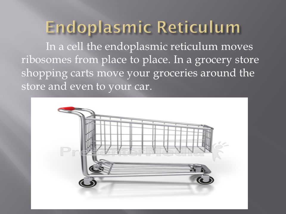 In a cell the endoplasmic reticulum moves ribosomes from place to place. In a grocery store shopping carts move your groceries around the store and ev