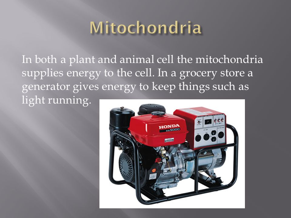 In both a plant and animal cell the mitochondria supplies energy to the cell. In a grocery store a generator gives energy to keep things such as light