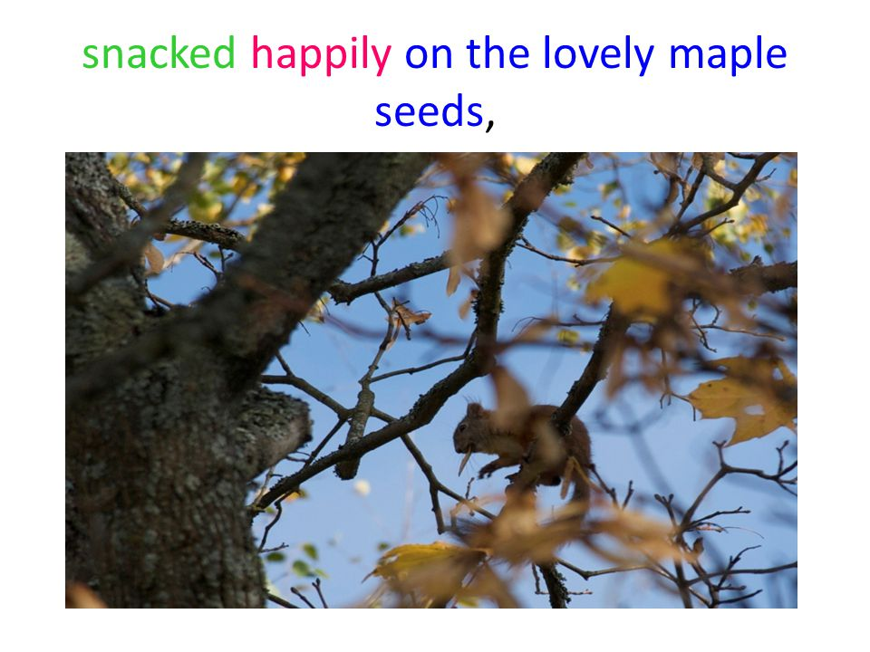 snacked happily on the lovely maple seeds,