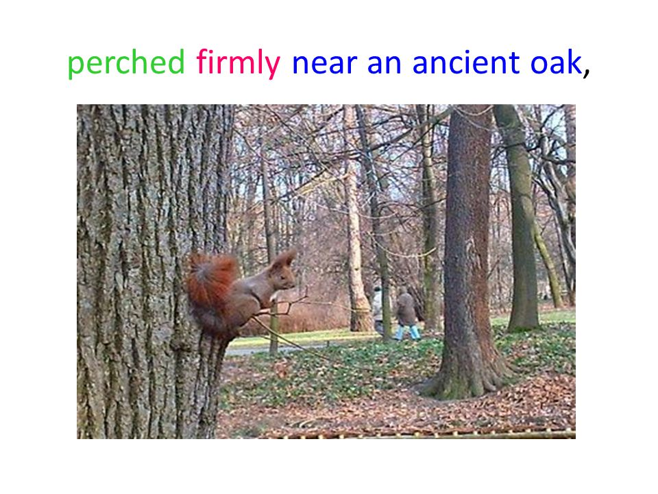 perched firmly near an ancient oak,