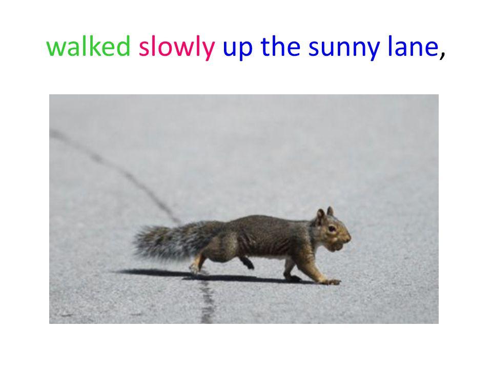 walked slowly up the sunny lane,