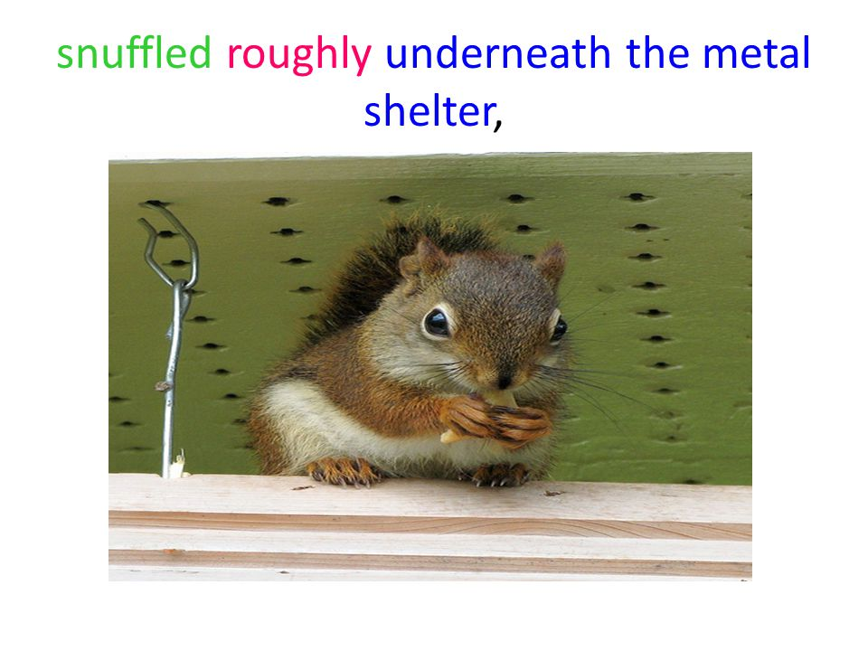 snuffled roughly underneath the metal shelter,