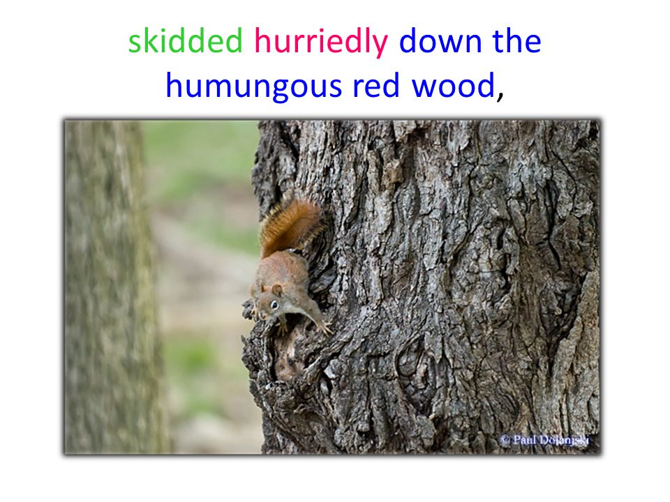 skidded hurriedly down the humungous red wood,
