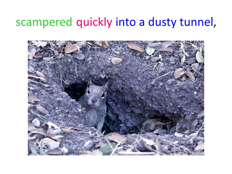 scampered quickly into a dusty tunnel,