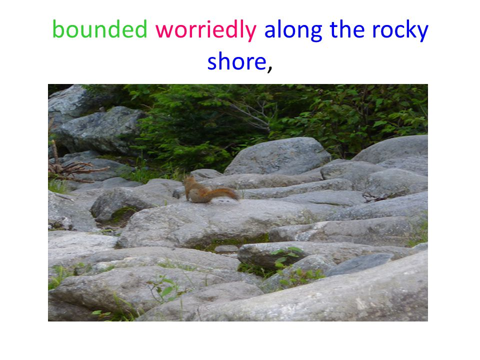 bounded worriedly along the rocky shore,