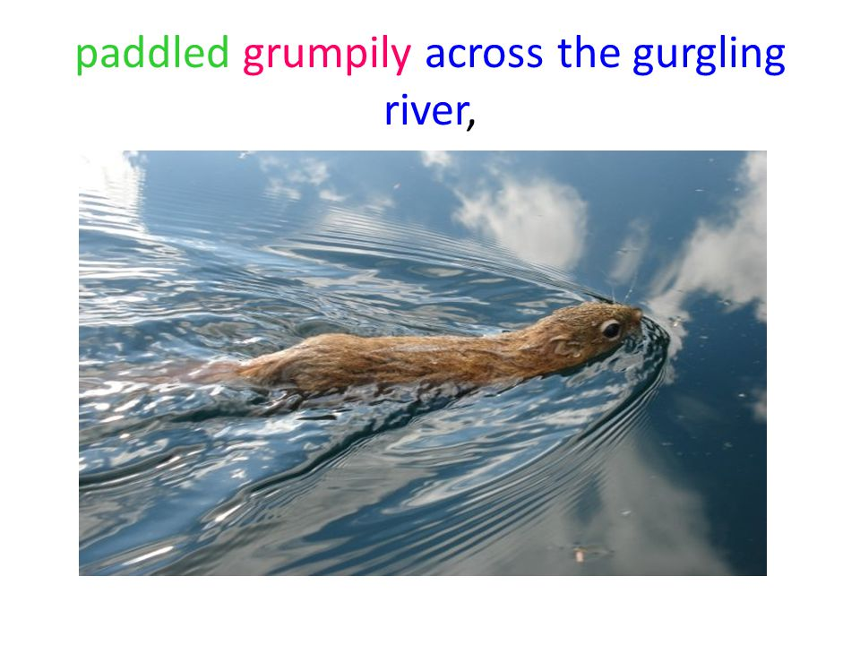 paddled grumpily across the gurgling river,