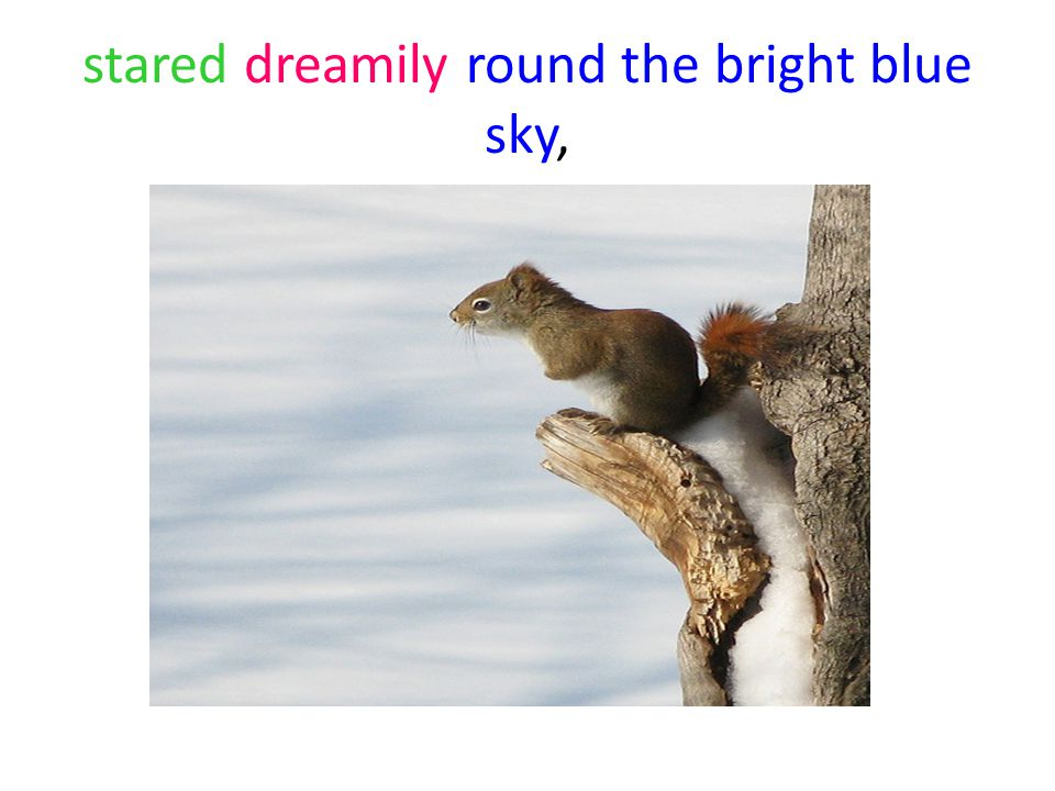 stared dreamily round the bright blue sky,
