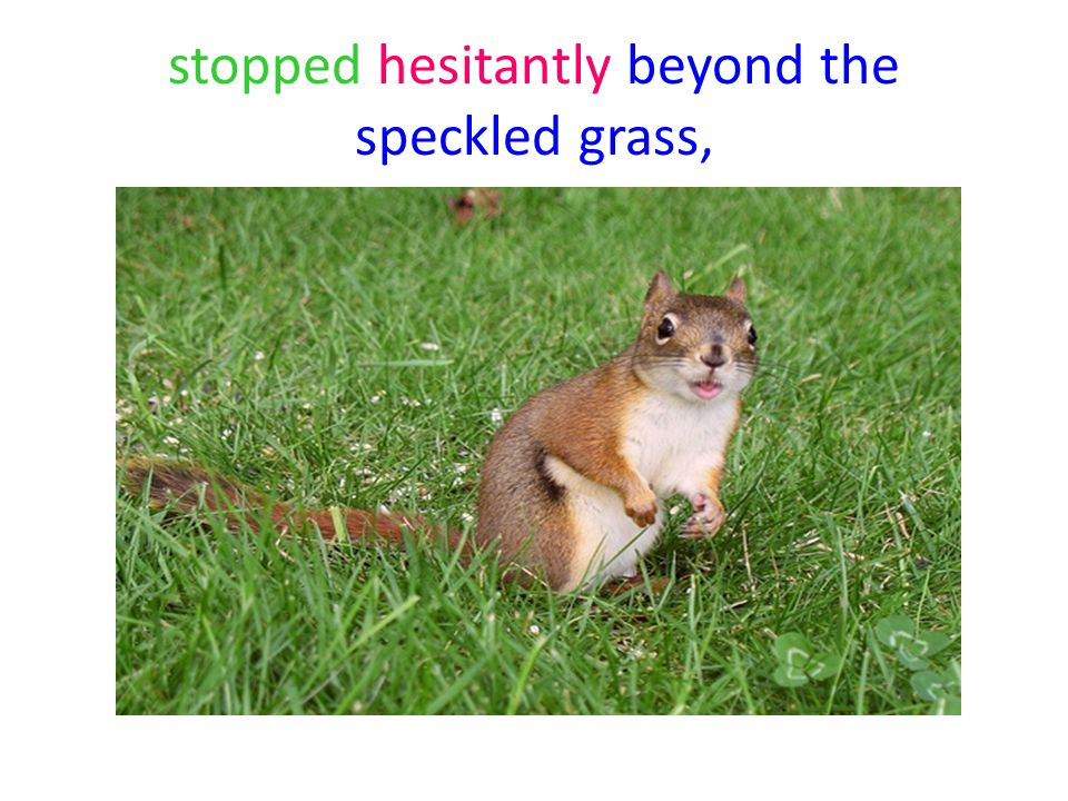 stopped hesitantly beyond the speckled grass,