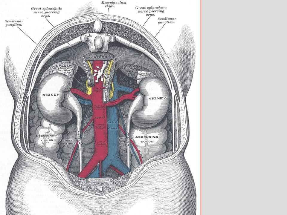 Retroperitoneal Injury Left medial visceral rotation.