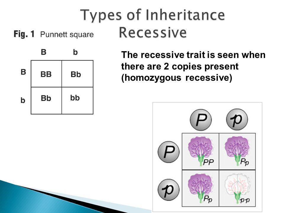 The recessive trait is seen when there are 2 copies present (homozygous recessive)
