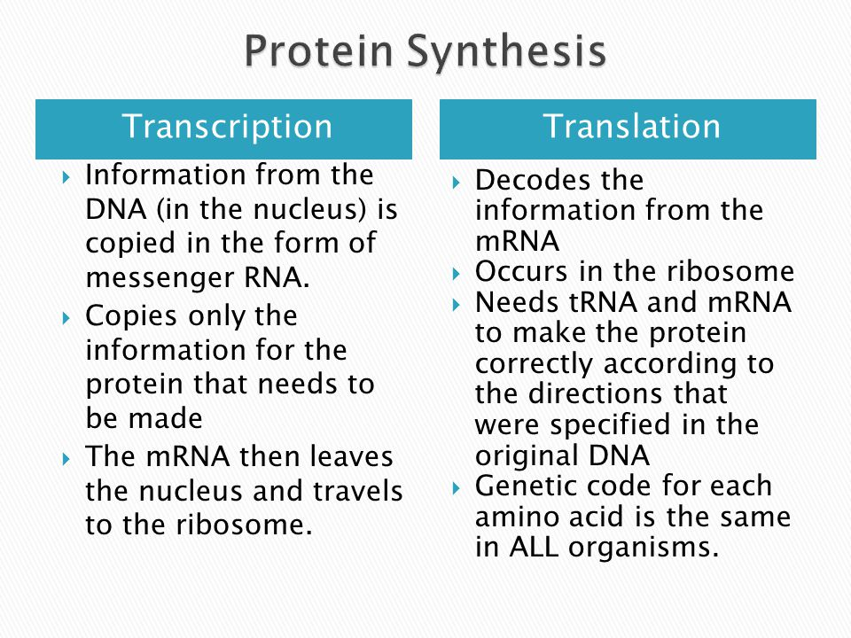 TranscriptionTranslation Information from the DNA (in the nucleus) is copied in the form of messenger RNA.