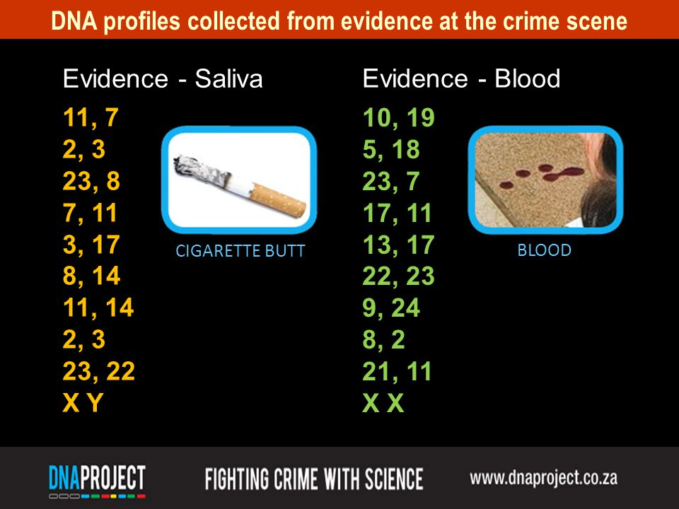 DNA profiles collected from evidence at the crime scene 11, 7 2, 3 23, 8 7, 11 3, 17 8, 14 11, 14 2, 3 23, 22 X Y Evidence - Saliva Evidence - Blood 10, 19 5, 18 23, 7 17, 11 13, 17 22, 23 9, 24 8, 2 21, 11 X BLOOD CIGARETTE BUTT
