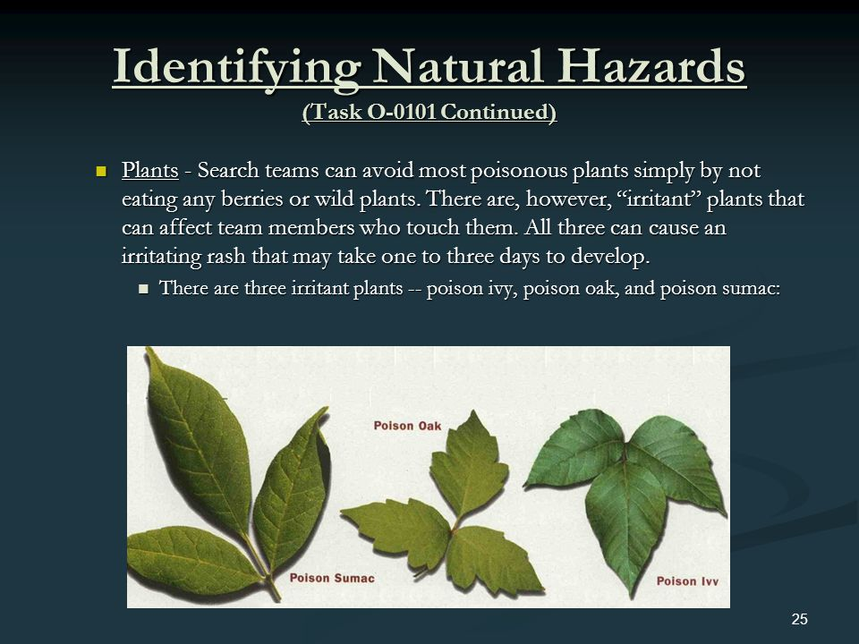 Identifying Natural Hazards (Task O-0101 Continued) Plants - Search teams can avoid most poisonous plants simply by not eating any berries or wild pla