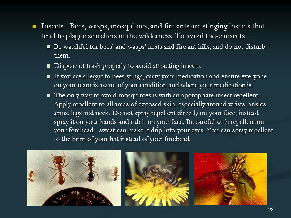 Insects - Bees, wasps, mosquitoes, and fire ants are stinging insects that tend to plague searchers in the wilderness. To avoid these insects : Insect