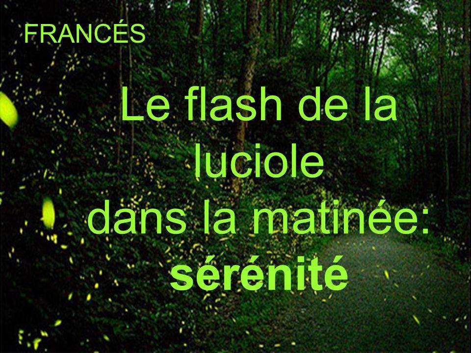 Le flash de la luciole dans la matinée: sérénité FRANCÉS