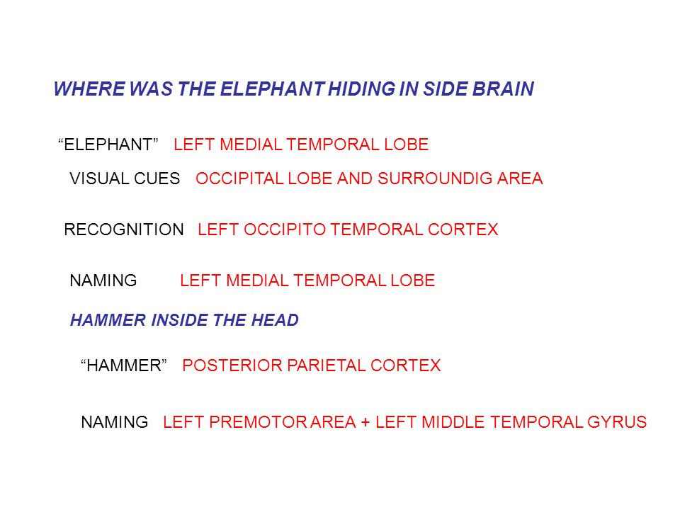 WHERE WAS THE ELEPHANT HIDING IN SIDE BRAIN ELEPHANT LEFT MEDIAL TEMPORAL LOBE VISUAL CUES OCCIPITAL LOBE AND SURROUNDIG AREA RECOGNITION LEFT OCCIPITO TEMPORAL CORTEX NAMING LEFT MEDIAL TEMPORAL LOBE HAMMER INSIDE THE HEAD HAMMER POSTERIOR PARIETAL CORTEX NAMING LEFT PREMOTOR AREA + LEFT MIDDLE TEMPORAL GYRUS