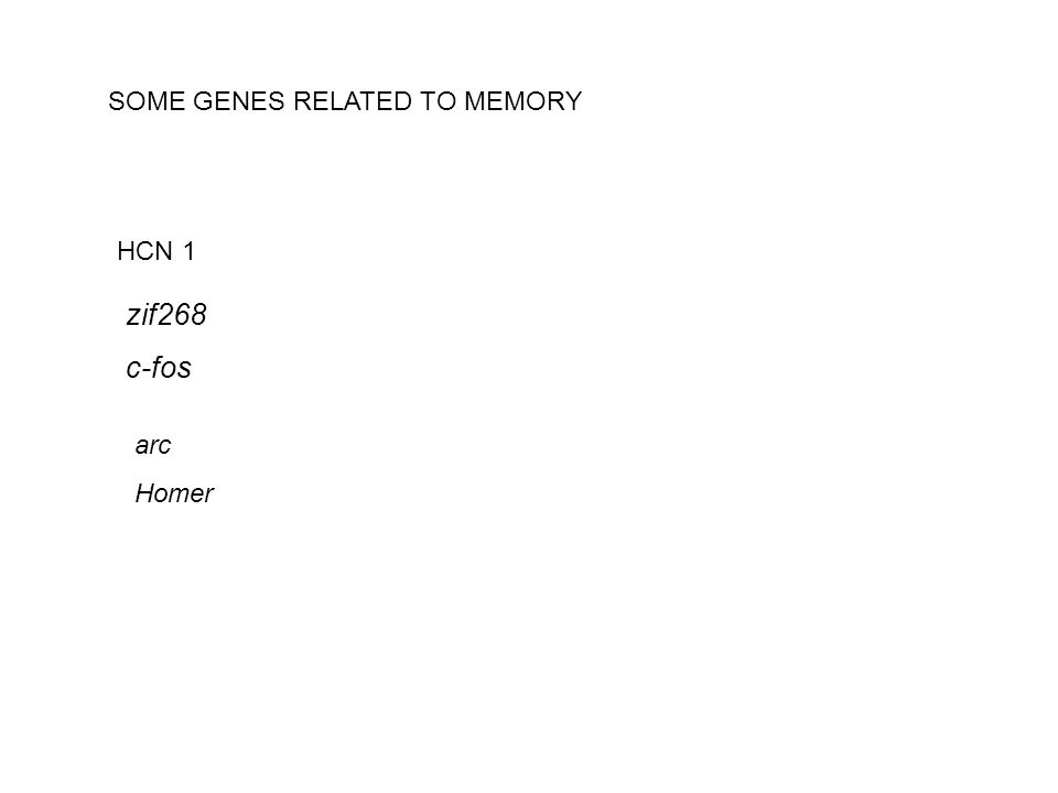 SOME GENES RELATED TO MEMORY HCN 1 zif268 c-fos arc Homer