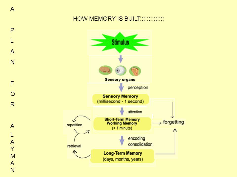 HOW MEMORY IS BUILT:::::::::::::: APLANFORAAPLANFORA LAYMANLAYMAN