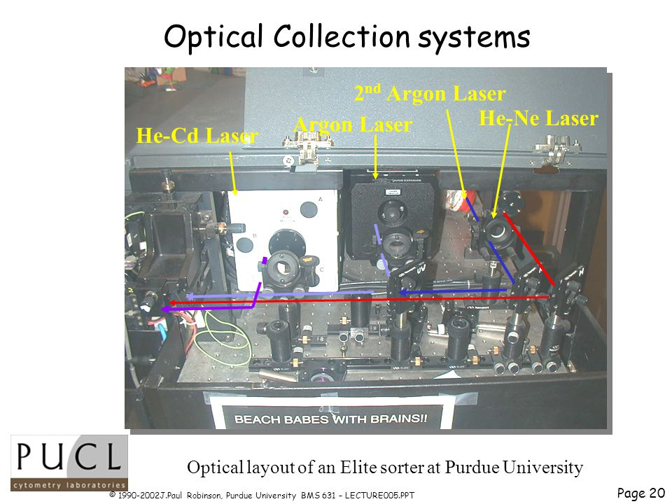 Page 20 © 1990-2002J.Paul Robinson, Purdue University BMS 631 – LECTURE005.PPT Optical Collection systems He-Cd Laser Argon Laser He-Ne Laser 2 nd Argon Laser Optical layout of an Elite sorter at Purdue University