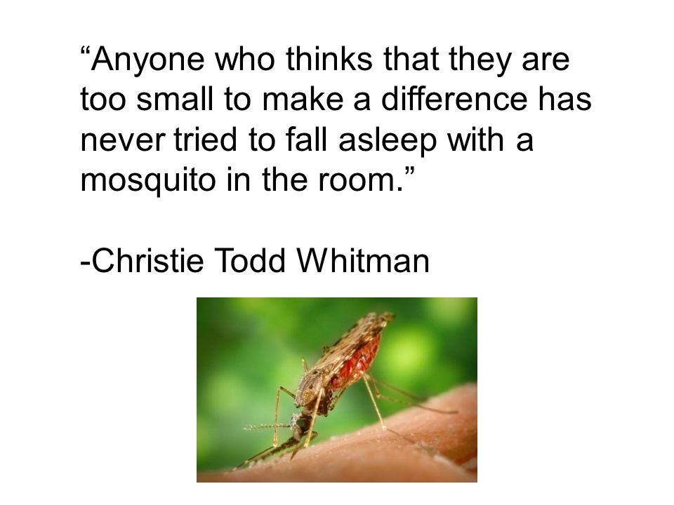Anyone who thinks that they are too small to make a difference has never tried to fall asleep with a mosquito in the room.