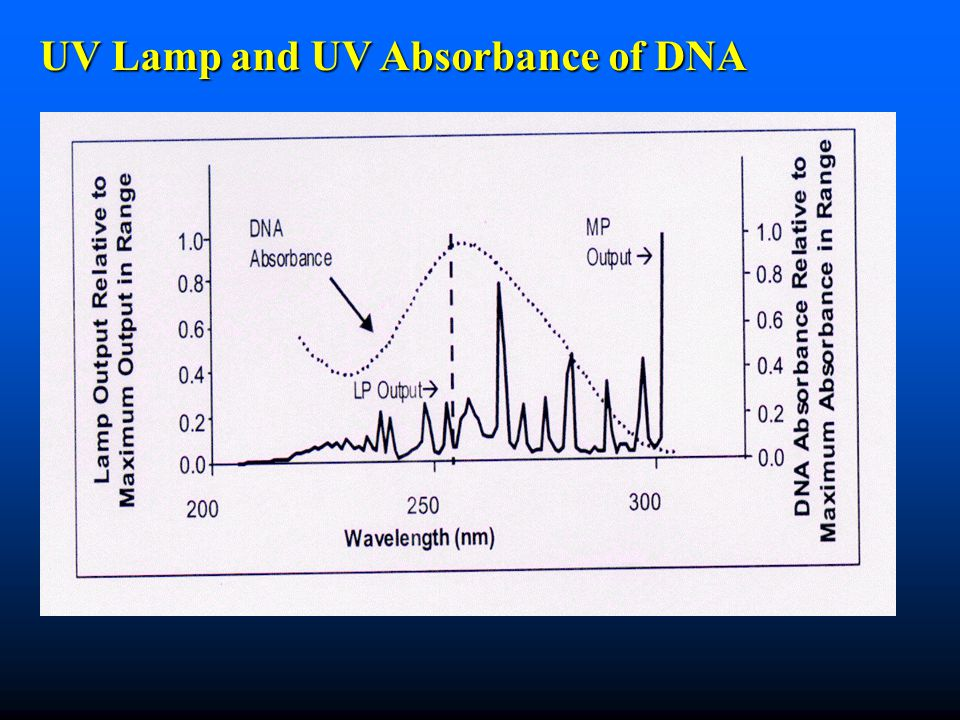 UV Lamp and UV Absorbance of DNA