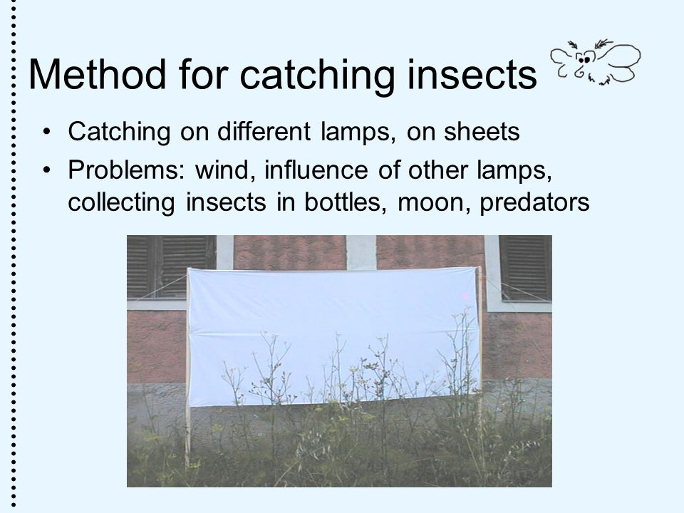 Method for catching insects Catching on different lamps, on sheets Problems: wind, influence of other lamps, collecting insects in bottles, moon, predators