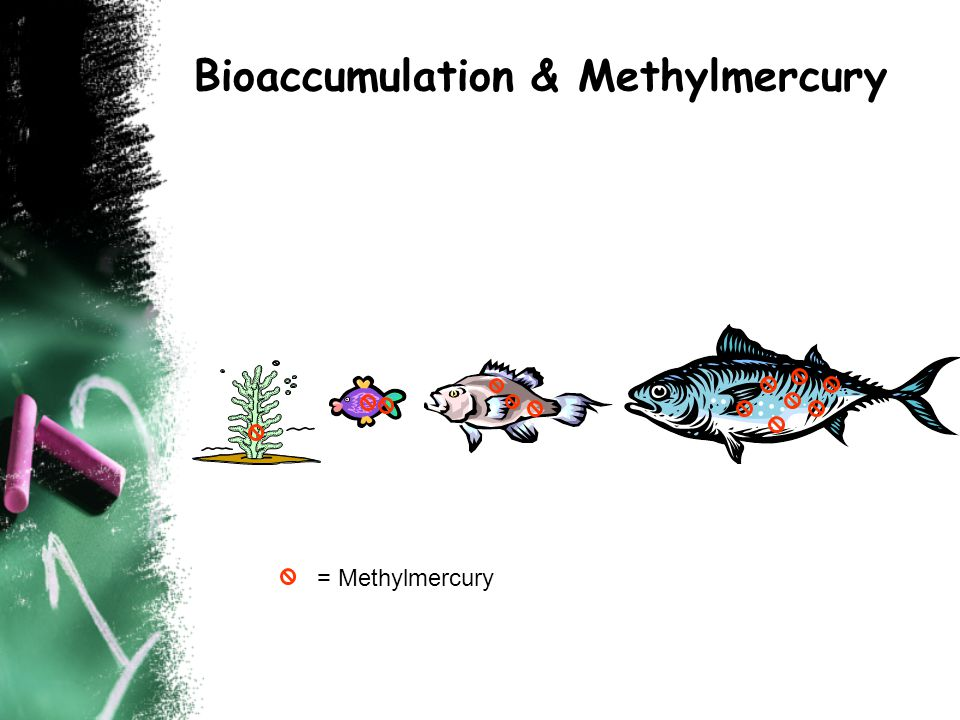 Bioaccumulation & Methylmercury = Methylmercury