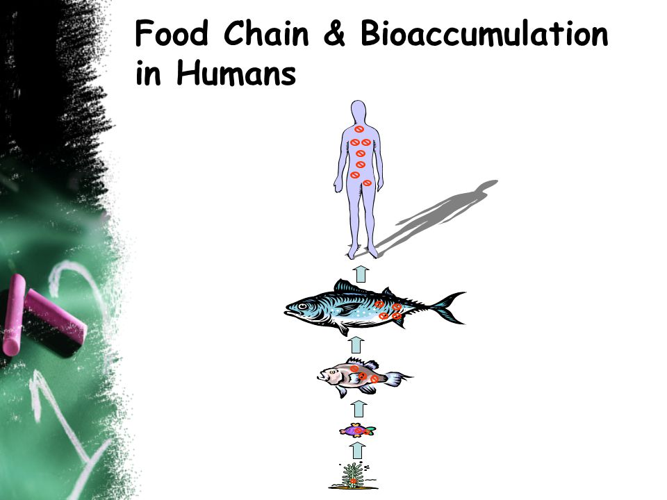 Food Chain & Bioaccumulation in Humans