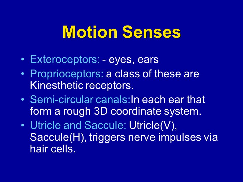 Motion Senses Exteroceptors: - eyes, ears Proprioceptors: a class of these are Kinesthetic receptors. Semi-circular canals:In each ear that form a rou