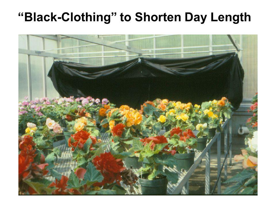 Black-Clothing to Shorten Day Length