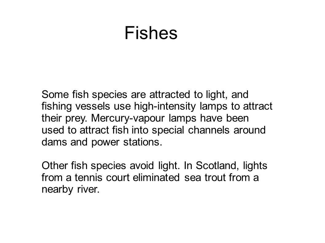 Fishes Some fish species are attracted to light, and fishing vessels use high-intensity lamps to attract their prey.