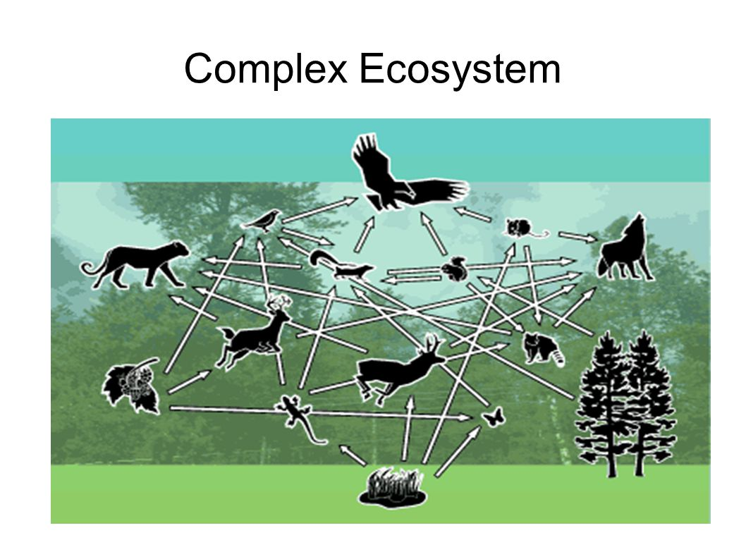 Complex Ecosystem