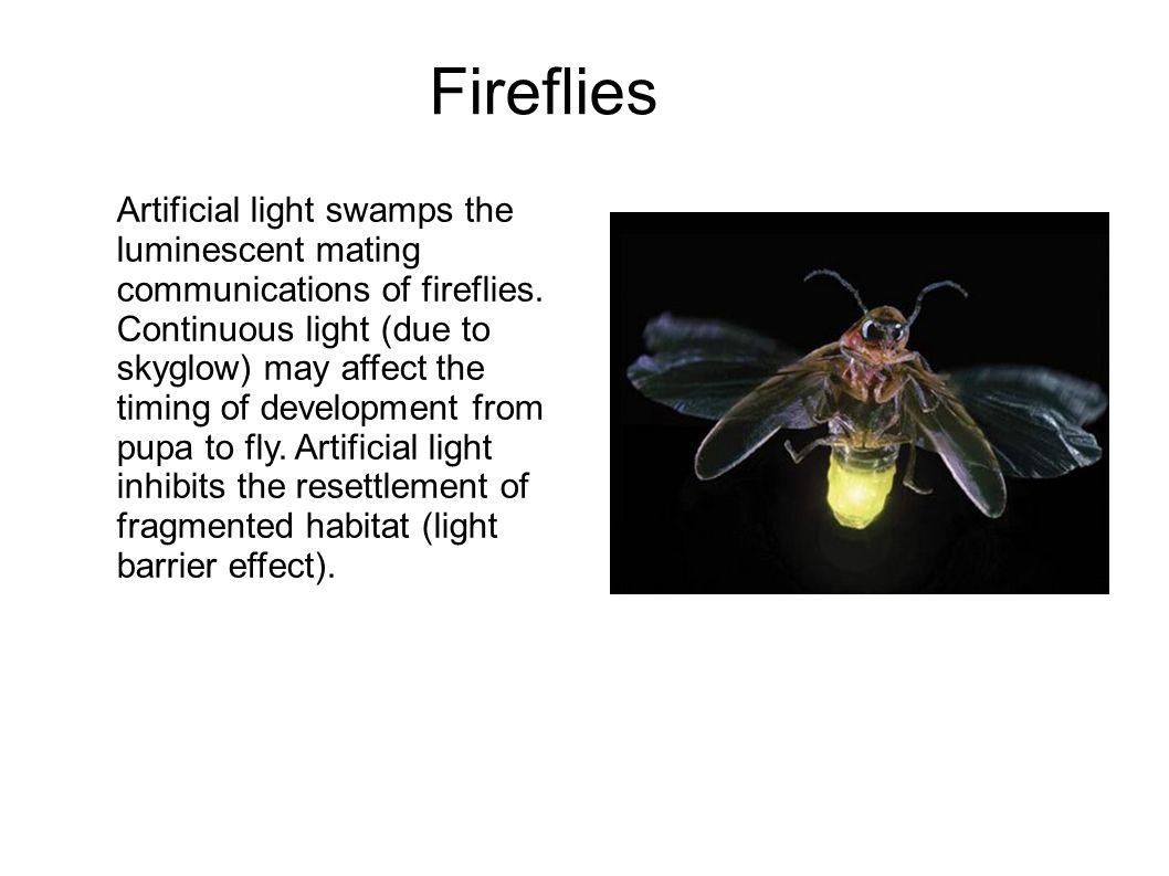 Fireflies Artificial light swamps the luminescent mating communications of fireflies.