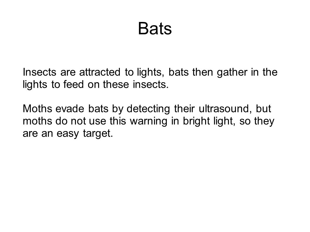 Insects are attracted to lights, bats then gather in the lights to feed on these insects.