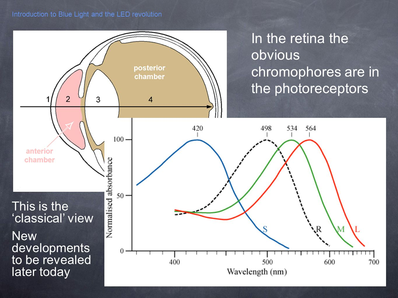 Introduction to Blue Light and the LED revolution In the retina the obvious chromophores are in the photoreceptors This is theclassical view New devel