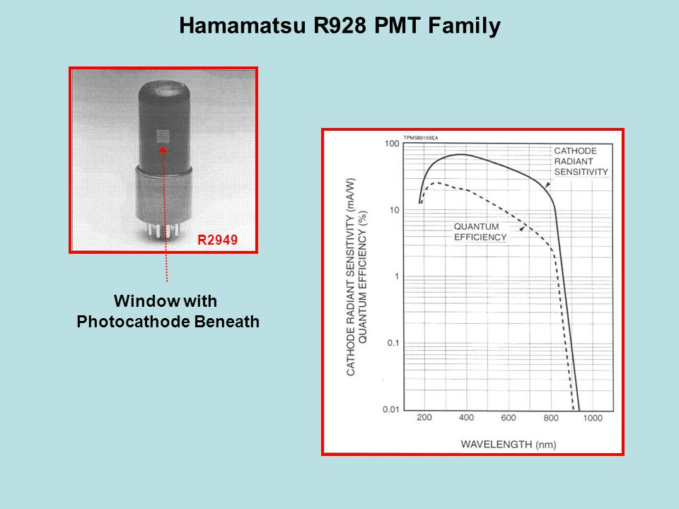 Hamamatsu R928 PMT Family Window with Photocathode Beneath R2949
