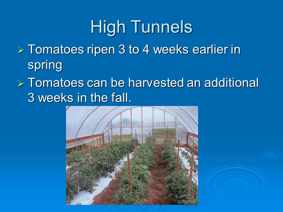High Tunnels Tomatoes ripen 3 to 4 weeks earlier in spring Tomatoes ripen 3 to 4 weeks earlier in spring Tomatoes can be harvested an additional 3 weeks in the fall.